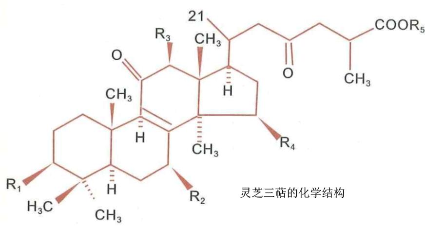 灵芝多糖三萜的化学结构.png